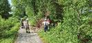 Mehrere Bäume in der Mindel in Thannhausen am 22.06.21